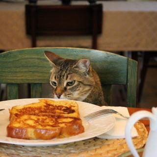 Breakfast Thief